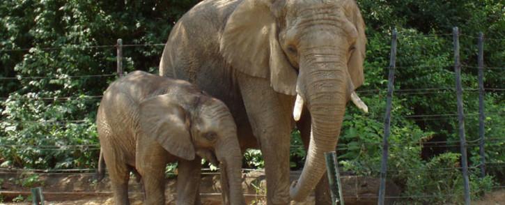 Elephants. Picture: Freeimages.com