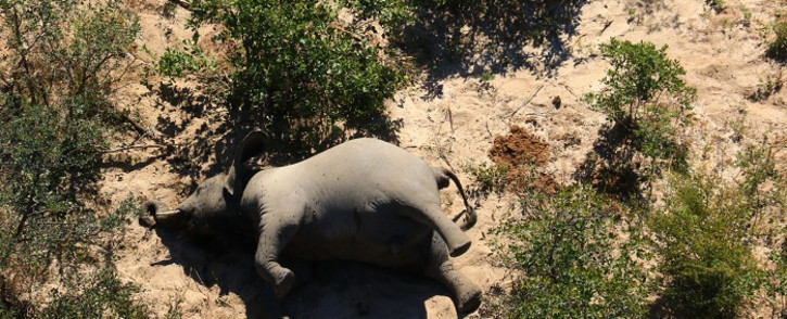 This image provided on 3 July 2020 courtesy of the National Park Rescue charity shows the carcass of one of the many elephants which have died mysteriously in the Okavango Delta in Botswana. Picture: AFP