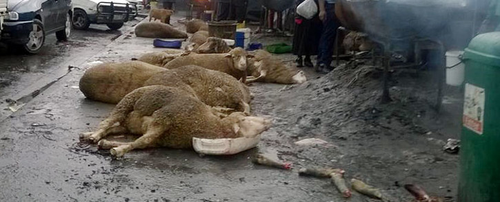 FILE. The SPCA has called for the closing down of a slaughter house in Sithandathu Avenue over hygiene issues.