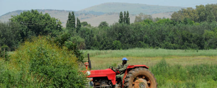 FILE: The national minimum wage for farmworkers is set to increase. Picture: Werner Beukes/SAPA.