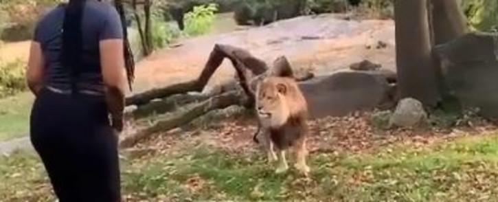 woman-climbs-into-lion-enclosurejpg