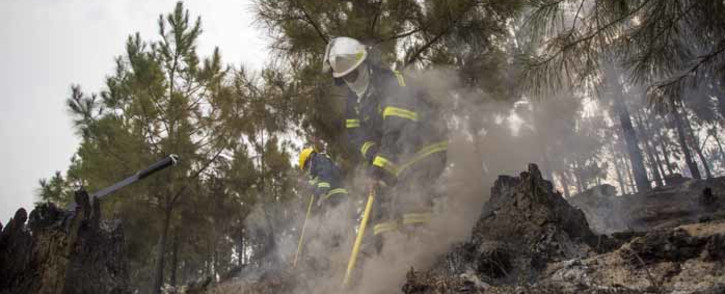 Volunteer ground crew in clean-up operations in one of Knysna's plantation forests. Picture: Thomas Holder/EWN