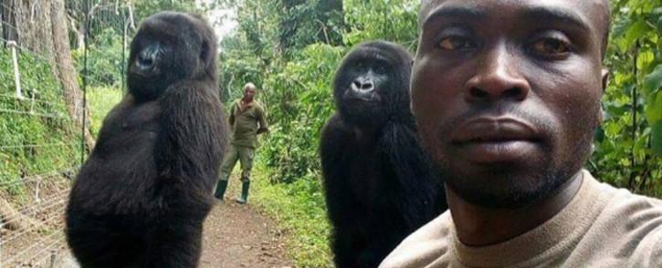 Mathieu Shamavu poses with the two orphaned female gorillas in Democratic Republic of Congo's Virunga National Park. Picture: @virunga/Facebook.com.