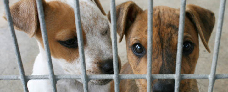 FILE: The NSPCA has also appealed to pet owners to be aware of the animals' stress and anxiety brought on by change in routine, especially with restricted movements. Picture: Supplied.