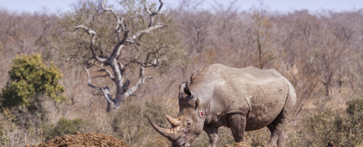 FILE: A rhino in the Kruger National Park. Picture: 123rf.com