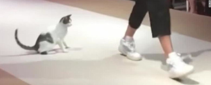 A stray cat accidentally walks onto a runway during a show in Istanbul. Picture: CNN