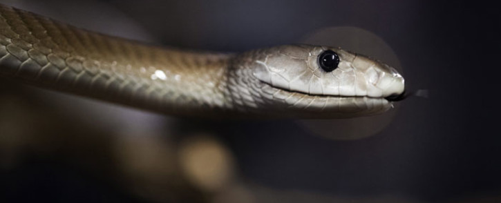 A black mamba. Picture: AFP