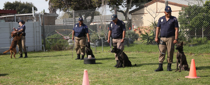 These 11 Dutch shepherds have officially been recruited to the Cape Town Metro Police squad. Picture: Bertram Malgas/EWN