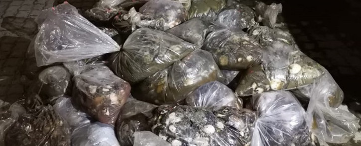 Overberg SAPS cluster members confiscated abalone with an estimated street value of R2.4 million on 02 September 2021. Picture: SAPS.
