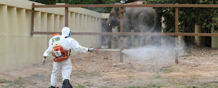 A Cambodian veterinary worker sprays disinfectant as newly-arrived Asian elephant Kaavan, who was flown from Pakistan, is seen in his new enclosure at the Kulen Prom Tep Wildlife Sanctuary in Cambodia's Oddar Meanchey province on 1 December 2020. Picture: AFP