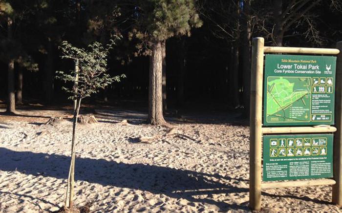 Tokai Forest. Picture: Lauren Isaacs/EWN.