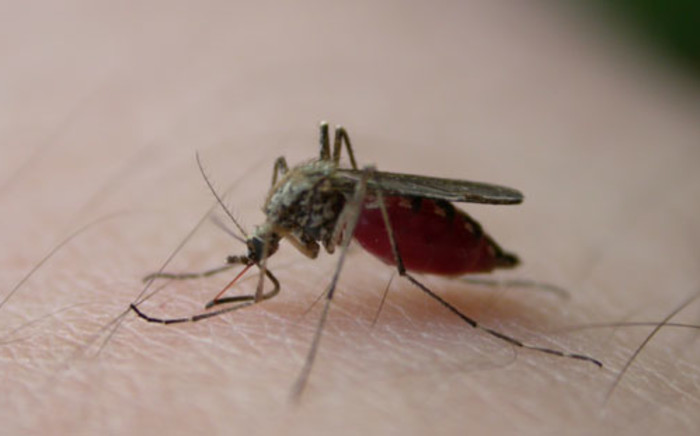 The University of Cape Town's science department believes it has found a single dose cure for Malaria.