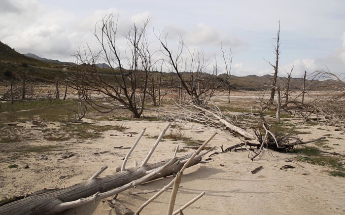 Tree stumps and sand lie on what used to be the bottom of the Theewaterskloof Dam. Picture: Bertram Malgas/EWN
