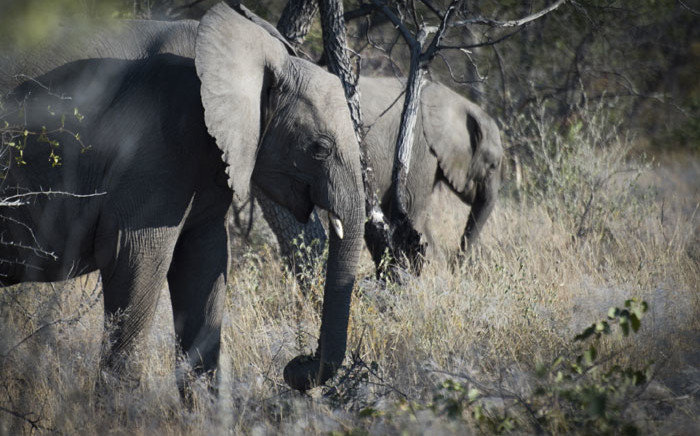 FILE: Elephants at Halali in the Etosha National Park in Namibia. Picture: AFP