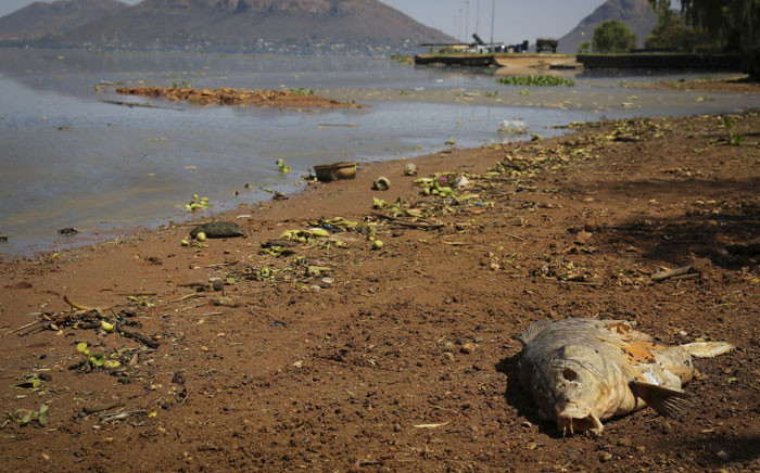 FILE: Hartbeespoort Dam has been affected by a sewage spill that originated from the Jukskei River in Gauteng. Picture: Christa Eybers/EWN.