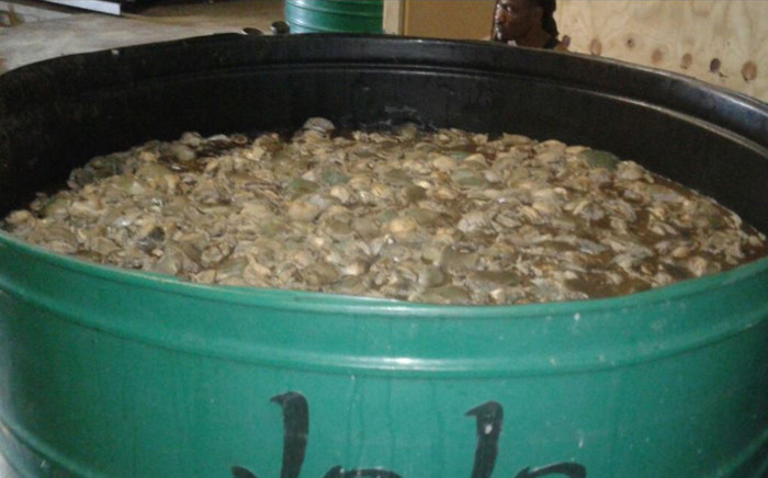 Western Cape police discovered abalone worth R5 million in Caledon on Sunday 5 November 2017. Picture: Twitter/@SAPoliceService