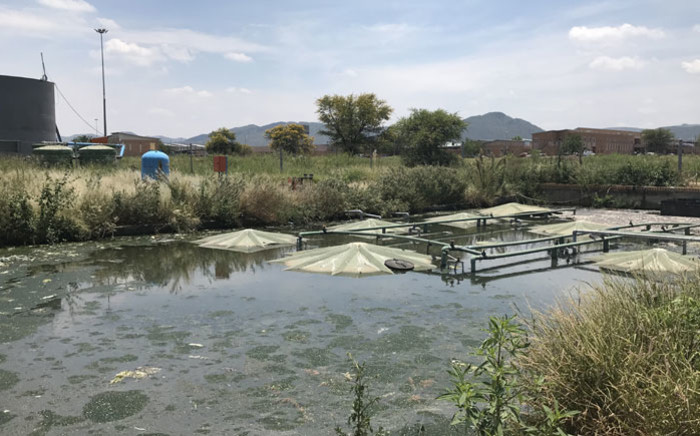 The Moses Kotane Hospital's sewage treatment plant near a local stream in Ledig, North West. Picture: Masechaba Sefularo/EWN