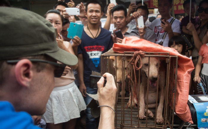 An animal rights activist (left) takes a picture of vendors waiting for customers to buy dogs in cages at a market in Yulin, in southern Chinas Guangin Yulin, in southern Chinas Guangxi province on 22 June 2015, during a dog meat festival. Picture: AFP.