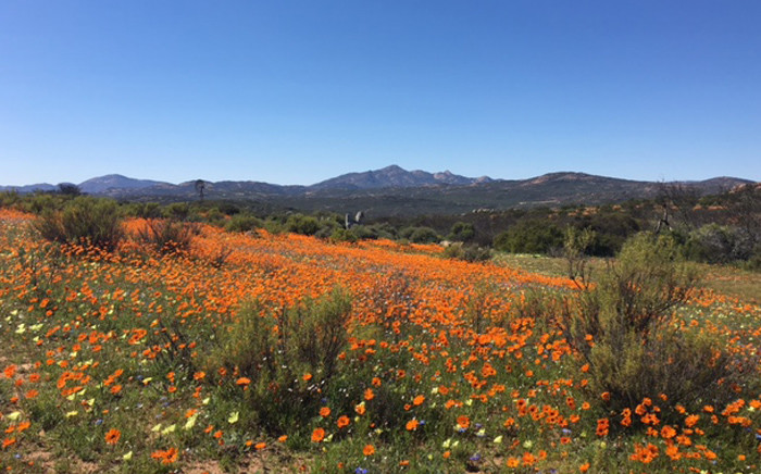 The Namaqua National Park is situated in the Kamiesberg Municipality in the Northern Cape. Picture: Leanne de Bassompierre/EWN.