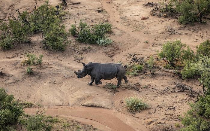 FILE: A bull rhino. Picture: EWN