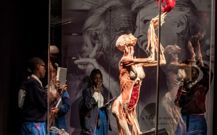 Body Worlds Exhibition Returns To Sa For A Second Time