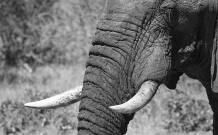FILE: An elephant is seen in Zimbabwe's Hwange National Park. Picture: www.zimparks.org.