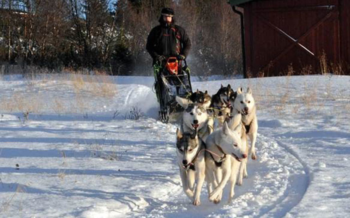JP Bussio taking part in mushing. Picture: Facebook.