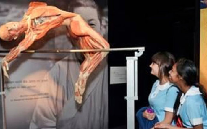 A preserved corpse is seen on display as part of the Body Worlds exhibition. Picture: The Body World Exhibition.