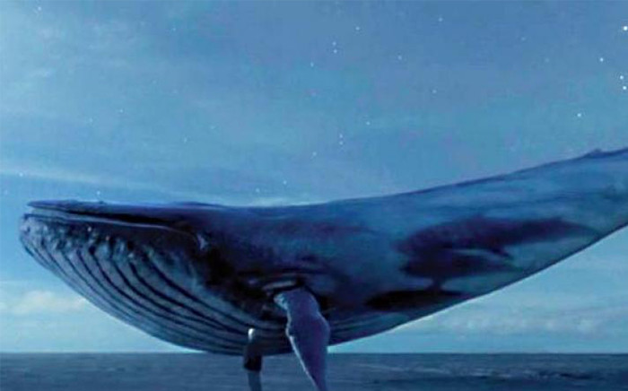 A screengrab of the 'Blue Whale' game.