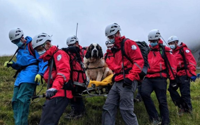 Sixteen rescuers were called out to save a St Bernard dog stranded on 26 July 2020 on an English mountain. The pooch named Daisy collapsed while descending from the summit of Scafell Pike in northwest England with her owners. Picture: @WasdaleMRT/Facebook.