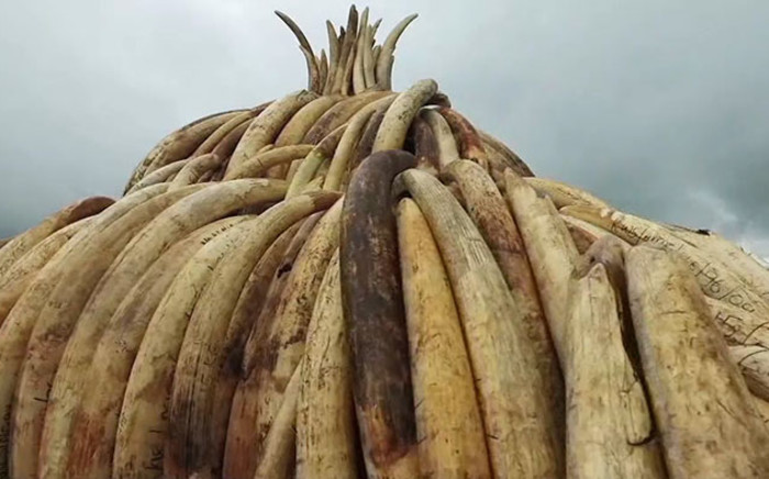 FILE: Kenya is set to burn 105 tons of siezed ivory. Picture: Supplied.