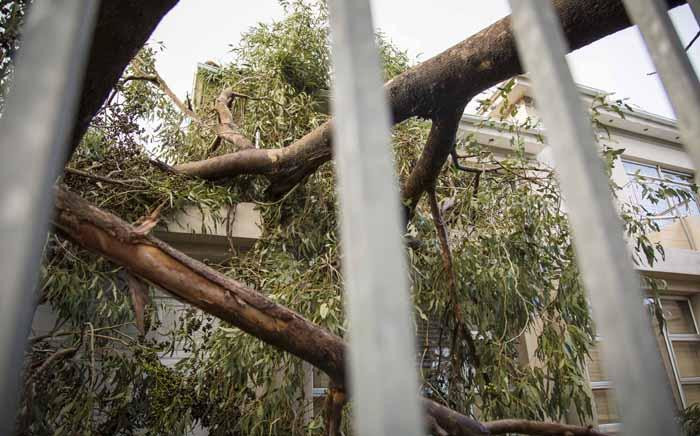 A house in Rondebosch East in almost crushed by a tree 7 June 2017. Picture: Thomas Holder/EWN