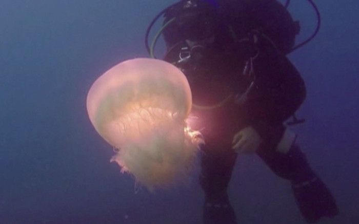 Marine biologists say an invasive species of jellyfish is making its way through the Suez and into the Mediterranean. Picture:CNN/screengrab