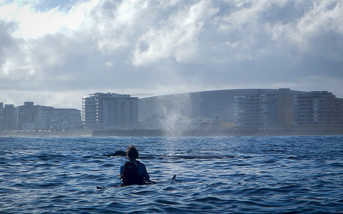 """A kayaker looks at a Southern Right with the Cape Town Stadium in the background. The whales were swimming on the Atlantic Seaboard just off Mouille Point. Picture: Kaskazi Kayaks"""""""