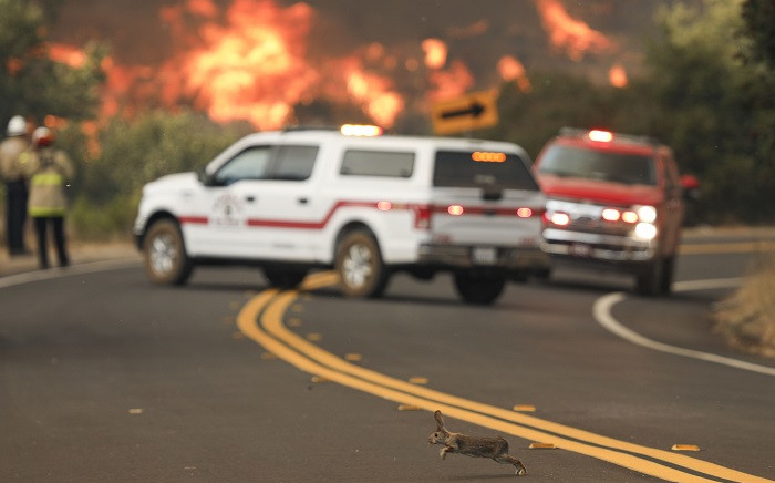 A rabbit crosses the road with flames from a brush fire along Japatul Road during the Valley Fire in Jamul, California on 6 September 2020 The Valley Fire in the Japatul Valley burned 4,000 acres overnight with no containment and 10 structures destroyed, Cal Fire San Diego said. Picture: AFP.