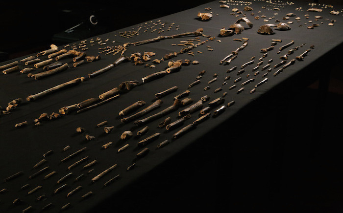 Long legs suggest Homo naledi was built for walking, while ape-like shoulders suggest it was probably also a good climber. Picture: Supplied.