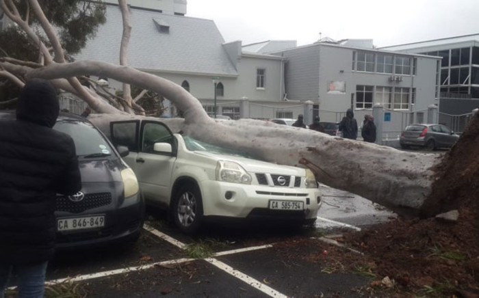 A car is crushed by an uprooted tree in a parking lot in Wynberg, Cape Town as heavy rain and gale-force winds lash the city during a storm on 27 June 2020. Picture: Supplied