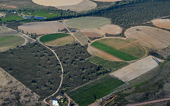 Potato crops seen from the air in the Cederberg district outside Clanwilliam. Picture: Aletta Gardner/EWN