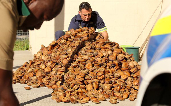 FILE: A 53-year-old Hermanus man has been arrested after he was caught with abalone worth R1,2 million in Cape Town. Picture: Saps.