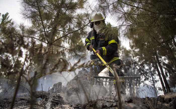 One of the volunteer ground crew conducts a clean-up operation in one of Knysna's plantation forests. Picture: Thomas Holder/EWN.