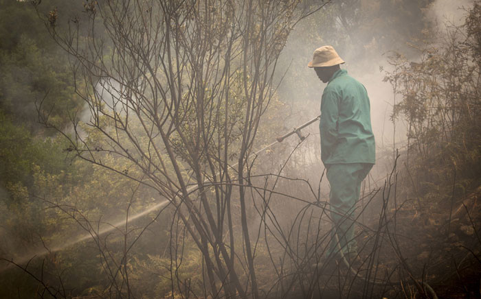 A farmworker douses flames next to an orchard on the Hillcrest Berry Farm on 20 January 2016. Picture: Aletta Harrison/EWN.