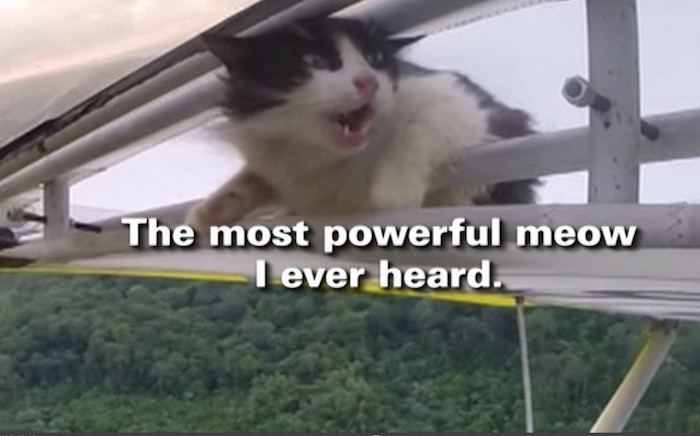 Stowaway cat lands safely. Picture: CNN