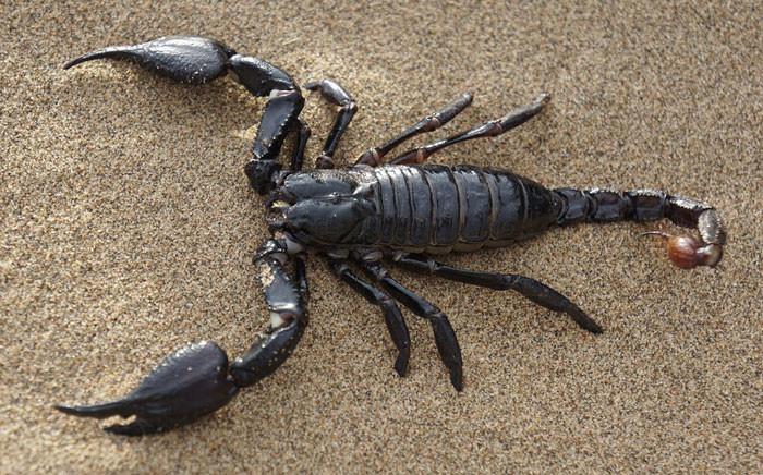 FILE: Scorpion. Picture: Pixabay.