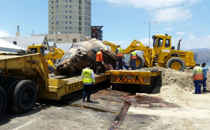 The humpback whale has been loaded onto flatbed truck and is en route to the Visserhok landfill site in the northern suburbs. Picture: ER24 Twitter/@ER24EMS.