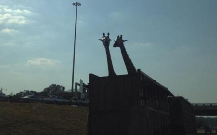 The giraffe hit it's head on the Garstfontein bridge. Picture: Twitter @PabiMoloi.