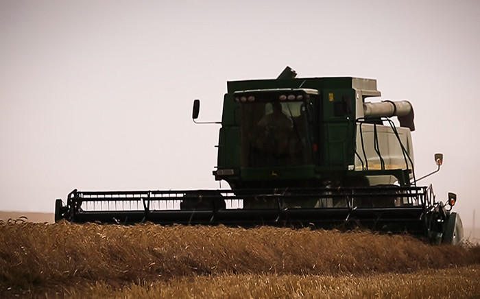 A combine harvester harvests the 2015 wheat fields in the Swartland district. This year has been plagued by severe water shortages. Picture: Anthony Molyneaux/EWN.