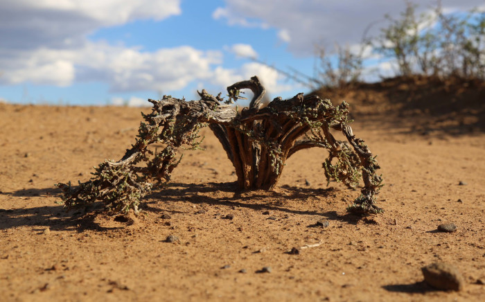 FILE: The WFP, which has already said 14 million people face hunger in the region, said the El Nino conditions had caused the lowest recorded rainfall between October and December since 1981. Picture: Christa Eybers/EWN.