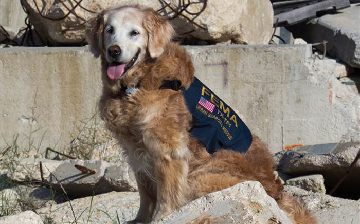 FILE: A screengrab shows the last known surviving search and rescue dog deployed to New York after the 11 September, 2001 attacks.