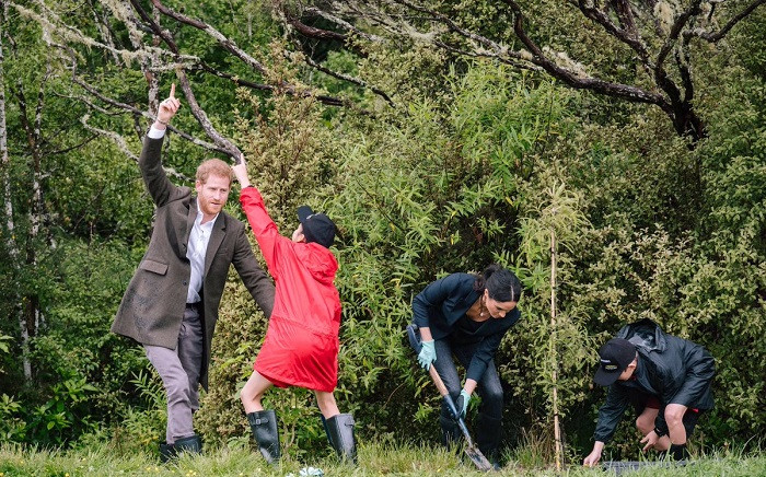 The Duke and Duchess of Sussex unveiled a @QueensCanopy dedication at North Shore Riding Club— to be named the Carol Whaley Native Bush, honouring a long-standing supporter of riding and conservation. Picture: @KensingtonRoyal/Twitter.com