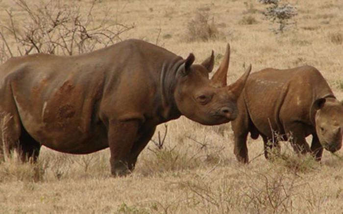 Black Rhinos, Kenya. Picture: Wikimedia Commons.